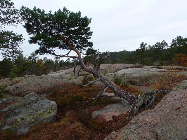 skuleskogen nacionalni park svedska